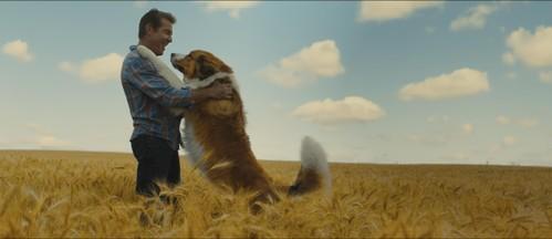 Filmrecensie: 'Belazerde dialogen, maar lieve honden in tranentrekker' [video]