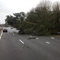 Omgevallen boom blokkeert deels snelweg A1 ter hoogte van Hilversum-Noord in de richting van knooppunt Eemnes.