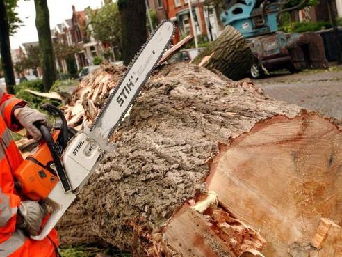 Proef met bomenkap zorgt nog niet voor kaalslag in Hilversum-Noord