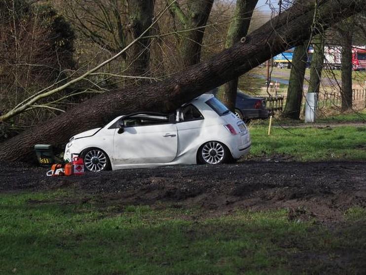 Boom op auto in Velsen-Zuid