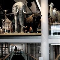 Deze opgezette dieren staan nog in de 'oude' toonzaal van Naturalis in Leiden.