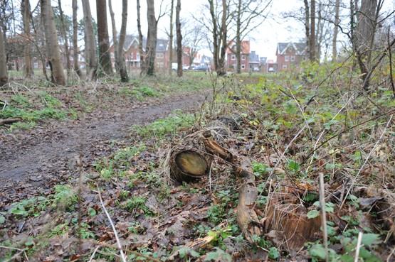 Bos overhevelen naar gemeente Castricum: 'Parnassia doet niets aan onderhoud Duin en Bosch'