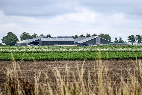 Raad van State vernietigt 'PAS-vergunning' van melkveehouder in Middenmeer, maar hoe nu verder?