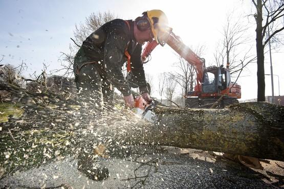 265 bomen moeten tegen de vlakte in Wijdemeren