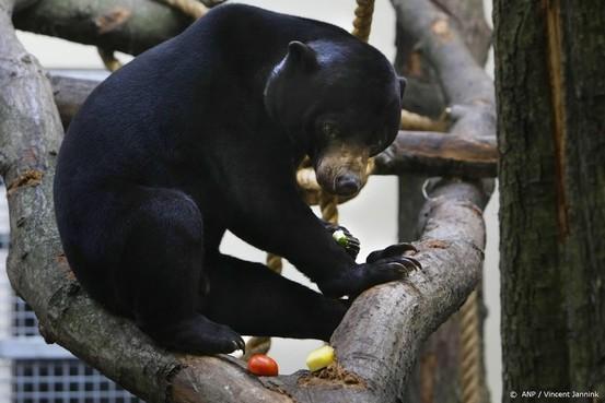 Eerste jongen voor Maleise beren in Nederland