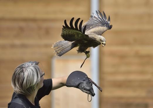 Roofvogelcomplex in Anna Paulowna gaat in april 2018 open