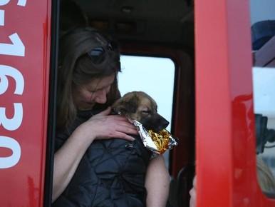 Man redt hondje uit ijskoud water Katwijk