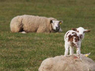 Honden mogen voorlopig nog los in polders Kaag en Braassem