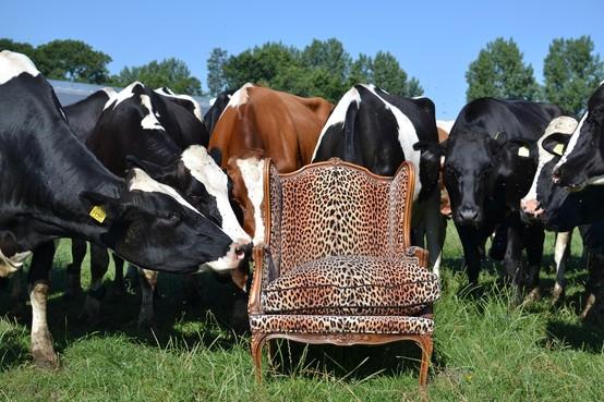De stoel van Haarlemmermeers John Nederstigt