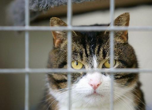 Roep om fonds voor dierenarts voor zwerfdieren