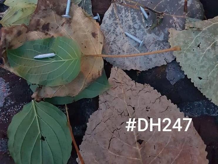 Bladeren met verborgen spijkers gedumpt op pad in Hillegom