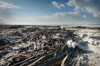 Kust van Zandvoort tot Egmond vervuild met paraffine
