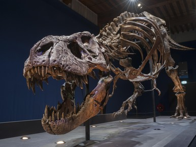 Een miljoen bezoekers voor Leidse T. Rex