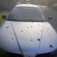 Bewoner van Hazepadflat baalt van de poep op zijn auto.