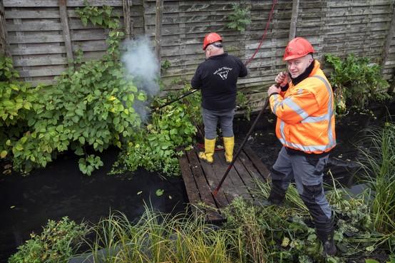 Japanse duizendknoop aan Boerhaavelaan in Haarlem drooggekookt in de hoop dat de plant doodgaat