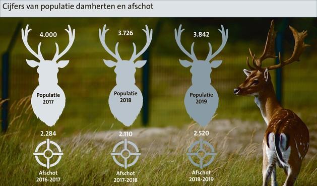Ondanks jacht lichte toename aantal damherten in en om Waterleidingduinen