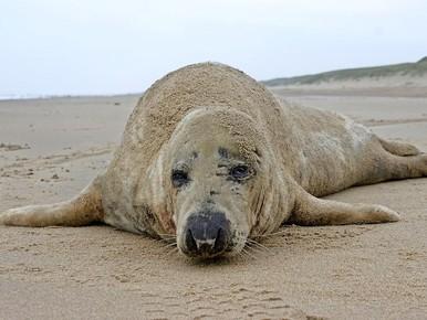Huilers pas na 24 uur naar zeehondenopvang