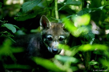 Boswachters bekeuren 'wolftoeristen'