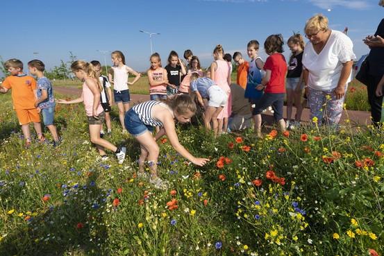 Leerlingen basisschool Roelofarendsveen laten vlinders los in de berm die zij 'maakten'