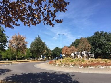 Herfstblad helpt boom met leven