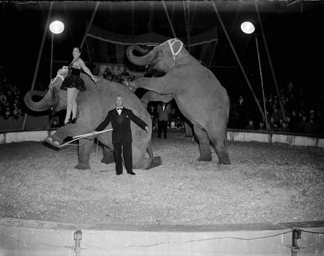 Zoekplaatje: olifanten van Strassburger