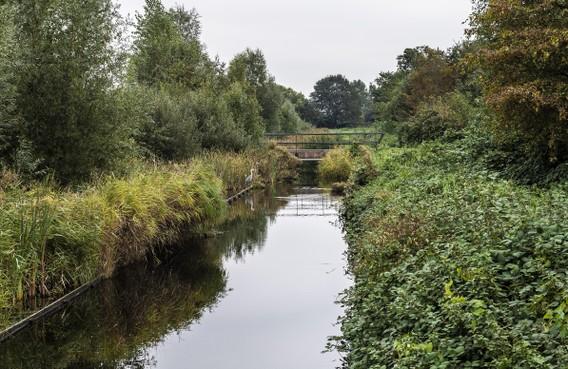 Natuur om de hoek: Braam woekert in zompig Haarlems Poelpolderbos