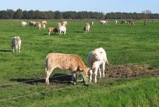 Slagerij Konijn in Den Helder is de eerste driesterrenslager van Noord-Holland