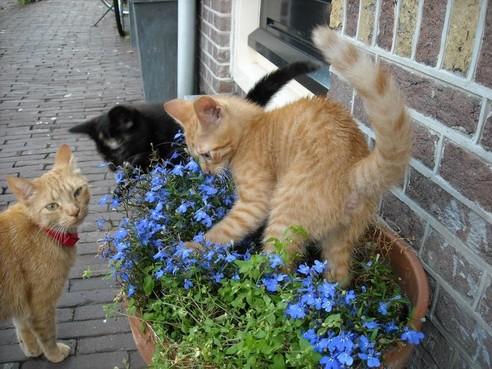 In 60 seconden: Kattenliefde