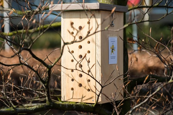Bijenhotels voor Castricumse scholen: 'Ik heb een cadeau gekregen dat ik maar wat graag doorgeef'