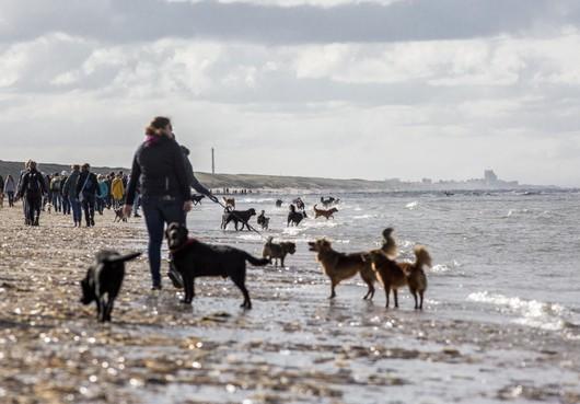 Massaal met de hond het Zandvoortse strand op voor goed doel
