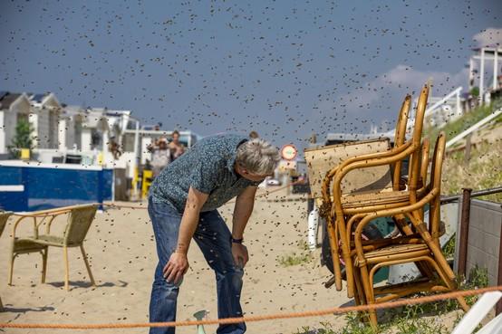 Duizenden bijen dagje naar het Zandvoortse strand