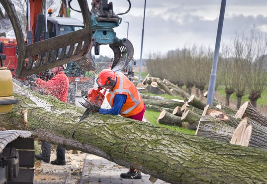 Honderden bomen in Haarlem-Schalkwijk nog dit jaar gekapt