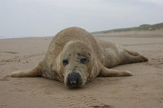 'Zeehond 57' vindt nog geen rust