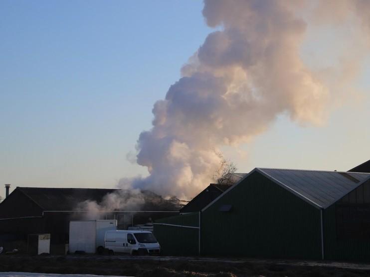 Varkens ontsnappen aan brand in schuur Voorhout