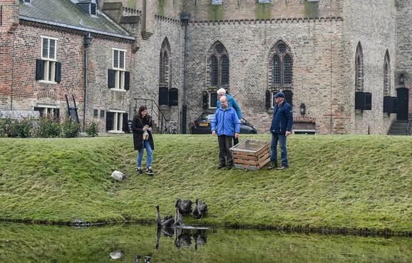 Geschonken zwarte zwanen bij kasteel Radboud na ruim week al spoorloos, kinderboerderij mist plots bijzondere eend
