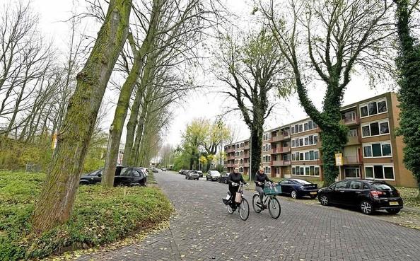 Bijl in populieren Drs F. Bijlweg Den Helder: weg is weg