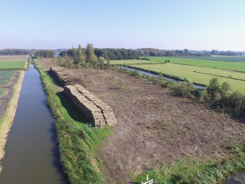 Bastwoekerziekte slaat toe in West-Friesland