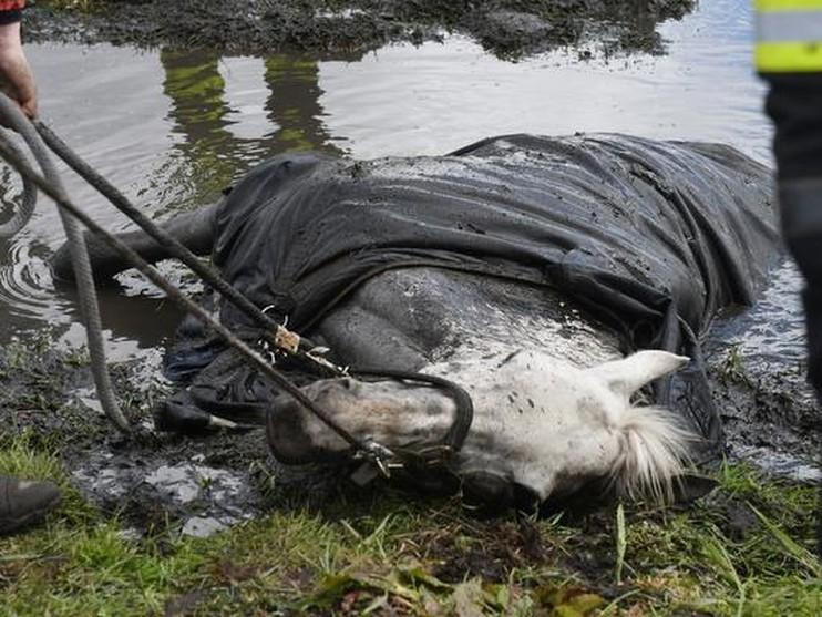 Paard uit sloot in Voorschoten gered