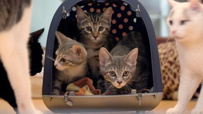 Filmrecensie: 'Weinig verrassend voor kattenliefhebbers' [video]