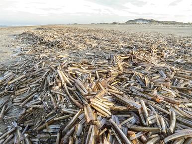 Het strand ligt vol met mesheften.