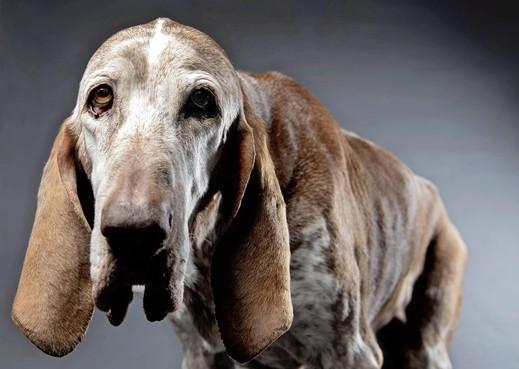 IJmuidense fotograaf Olaf Kraak brengt ode aan de oude hond