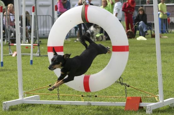Opmeer wil 'hondenlosloopbeleid' De Weijver niet veranderen