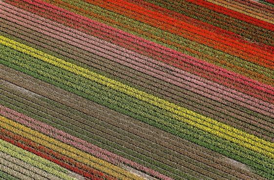 Landbouwgif in urine inwoners bij bollenvelden