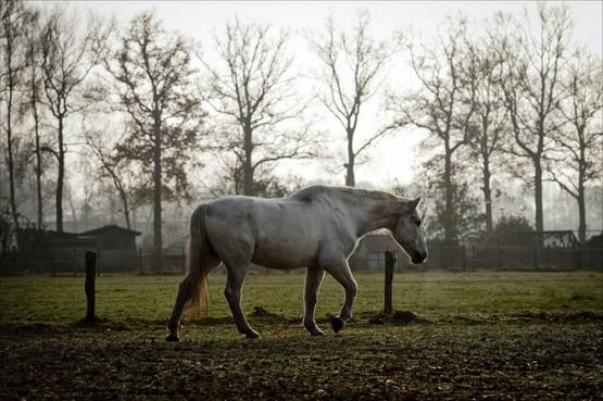 Paardenfokker krijgt boete voor vieze stallen: 'Als paarden door de dunne stront rollen, is dat geen fijn gezicht'
