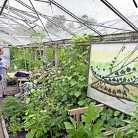 Groen wat houd ik van je groen: werk in de kas van tuin 9.