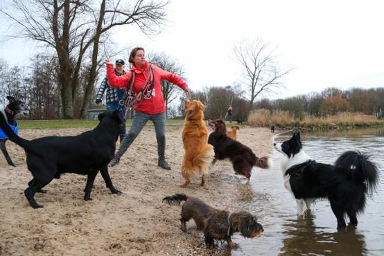 Ode aan Hoorns hondenparadijs