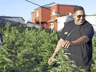 Yassine Boulahfa van stichting Stay Natural, Stay Healthy tussen de hennepplanten in Marokko. Hij werkt sinds kort samen met de Canadees Rick Simpson, die dertig jaar geleden begon met de productie van medicinale cannabisolie.