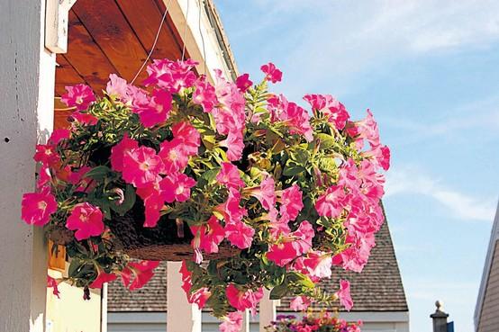 'Laat winkeliers Laren bloemenpracht (mee)betalen'