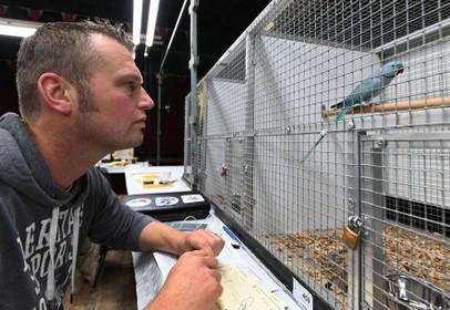 Keurmeester tuurt kritisch naar de vogeltjes van de Streker Vogelvrienden