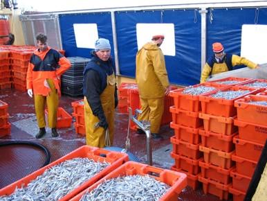 Verbod op spieringvisserij in IJsselmeer